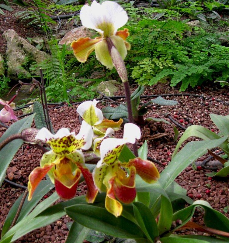 В царстве орхидей