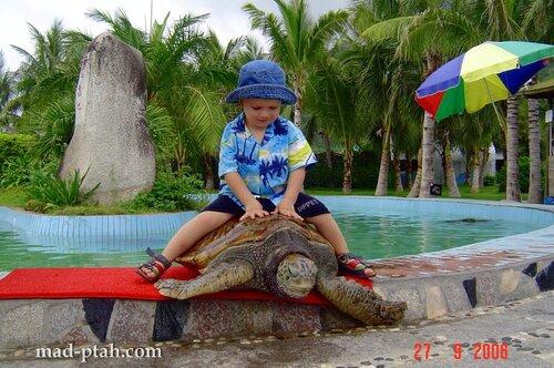 черепаха, океанариум, китай, хайнань