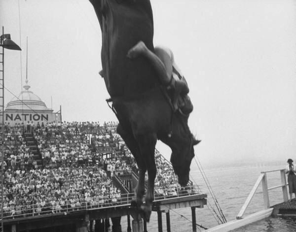 diving horses