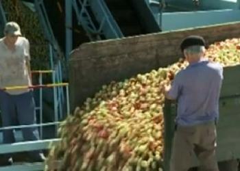 Молдова может упустить 68 млн евро от ЕС, предназначенных фермерам
