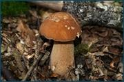 http://img-fotki.yandex.ru/get/5208/15842935.142/0_d0992_cf0b5ec1_orig.jpg