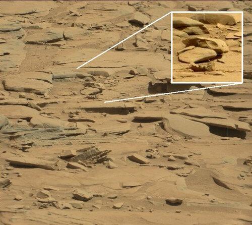 И ещё один череп ящера на Марсе