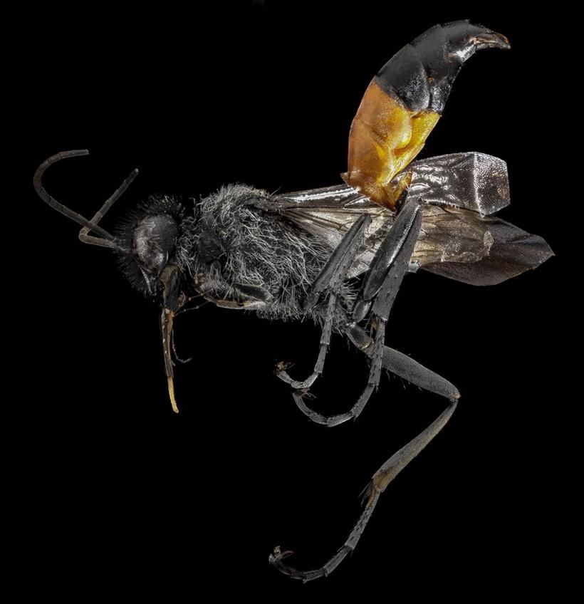 Макрофотографии разноцветных американских пчел 0 13d2b9 88d99b18 orig