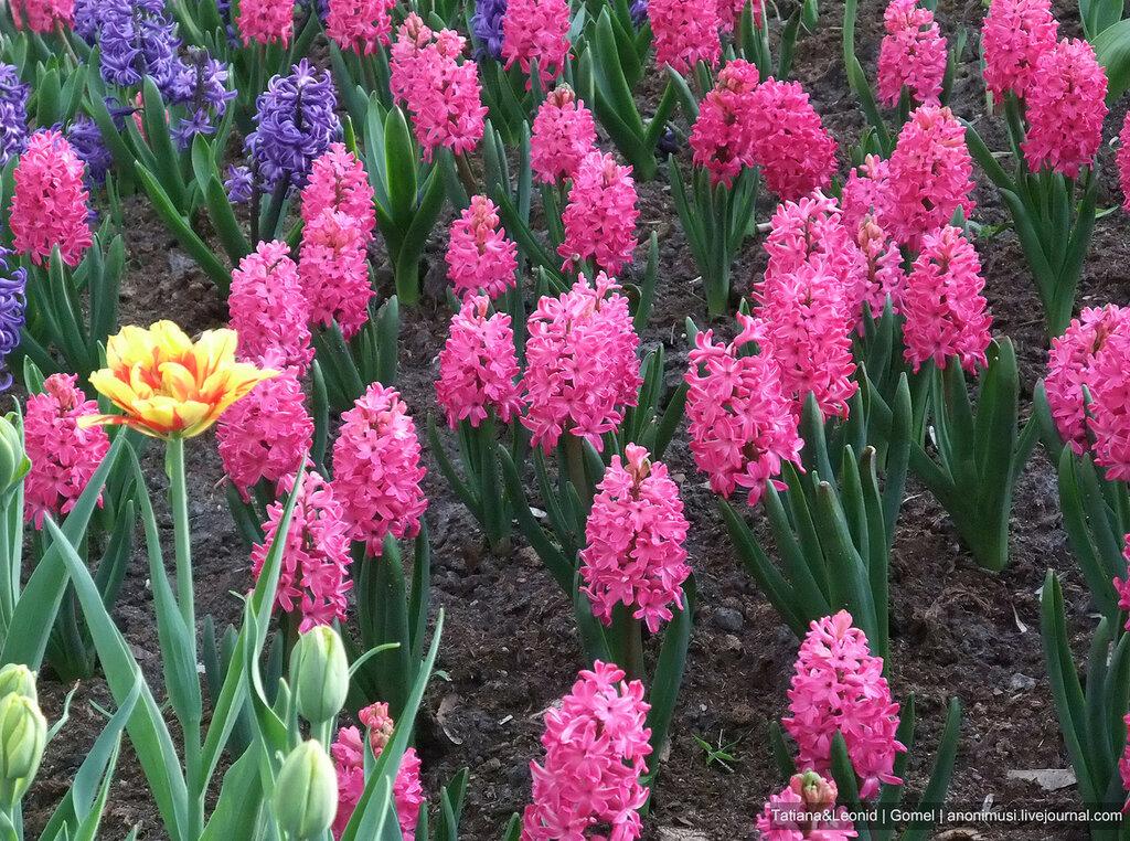 В душе весна