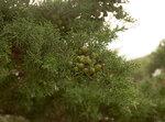 Seaside Provence flora