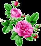 rosenrosa096.png