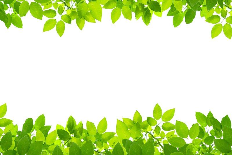 зеленые листья на белом