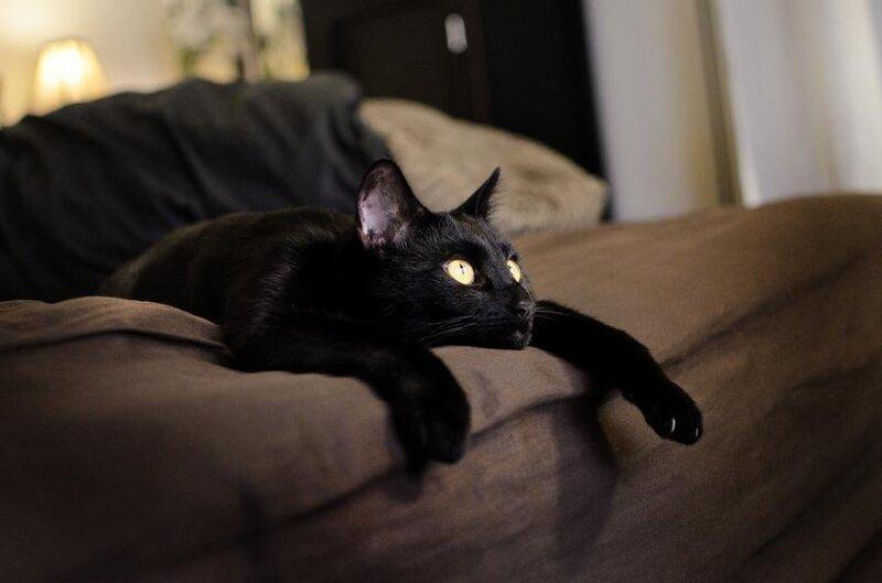 Funny cats black Cat : 09b7c7c46dd9a0XL from funnycoolcats.blogspot.com size 800 x 529 jpeg 56kB
