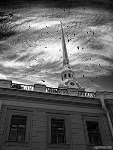 Опус 69852 (монохром, небо, окно, Петербург, Петропавловский собор, птица, человек)