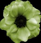 RR_Flower1.png