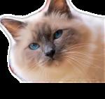 Кошки 5 0_509fe_7914179a_S
