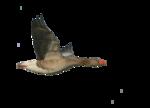 Птицы  разные  0_51c8c_f6600cb7_S