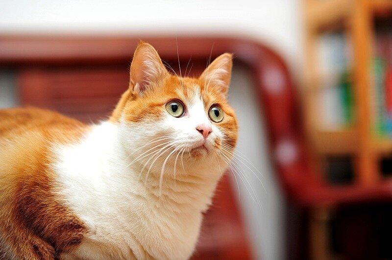 Кошки  0_5290f_acf0fff5_XL