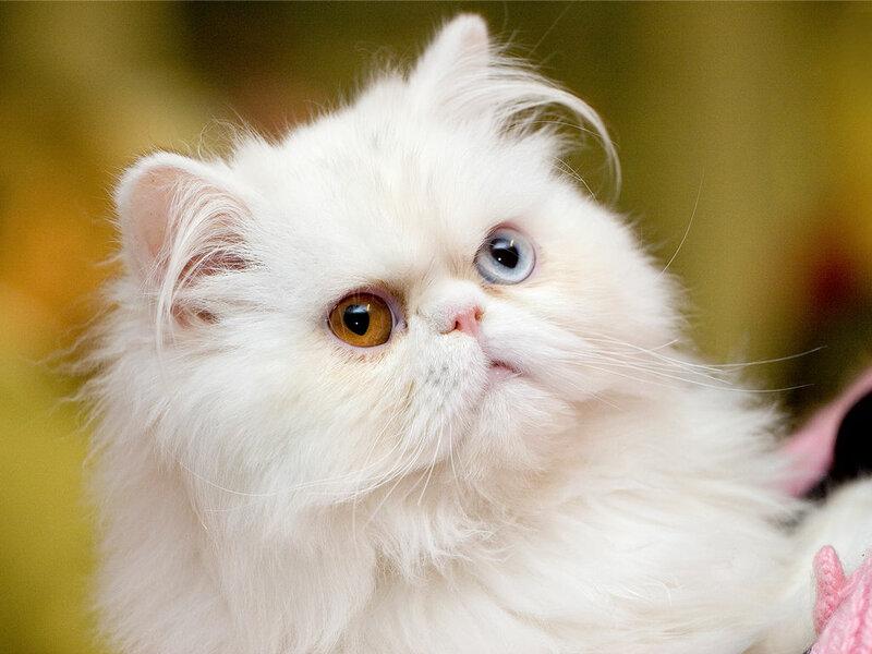 Кошки  0_52955_5791dec_XL