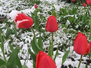 В Сковородинском районе Амурской области вчера выпал снег