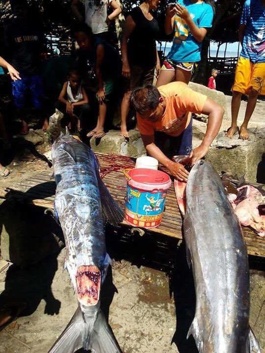 "In the Philippines, caught ""tattooed"" fish"