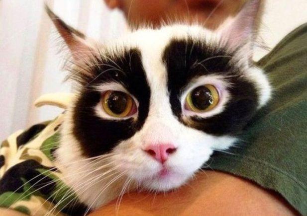 кошки-кошки-5.jpg