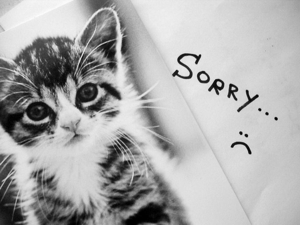 Котёнок с надписью прости