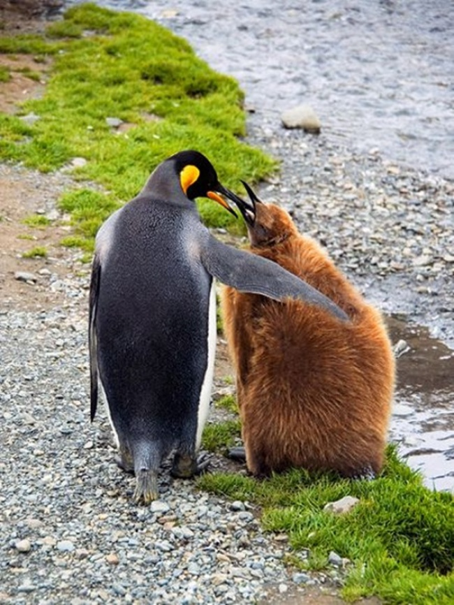 © National Geographic  Фото на превью imgur