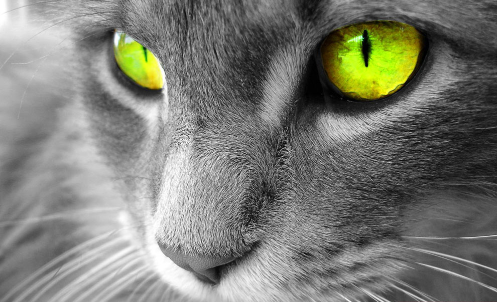 Когда мы играем с кошкой, еще вопрос, кто с кем играет — я с ней или она со мной. Мишель де Мон