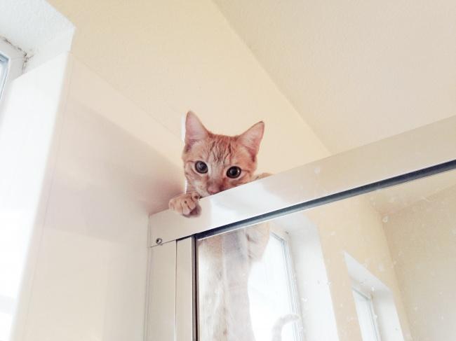 © im_so_inti_porn   «Наш кот впервые залез надерево»