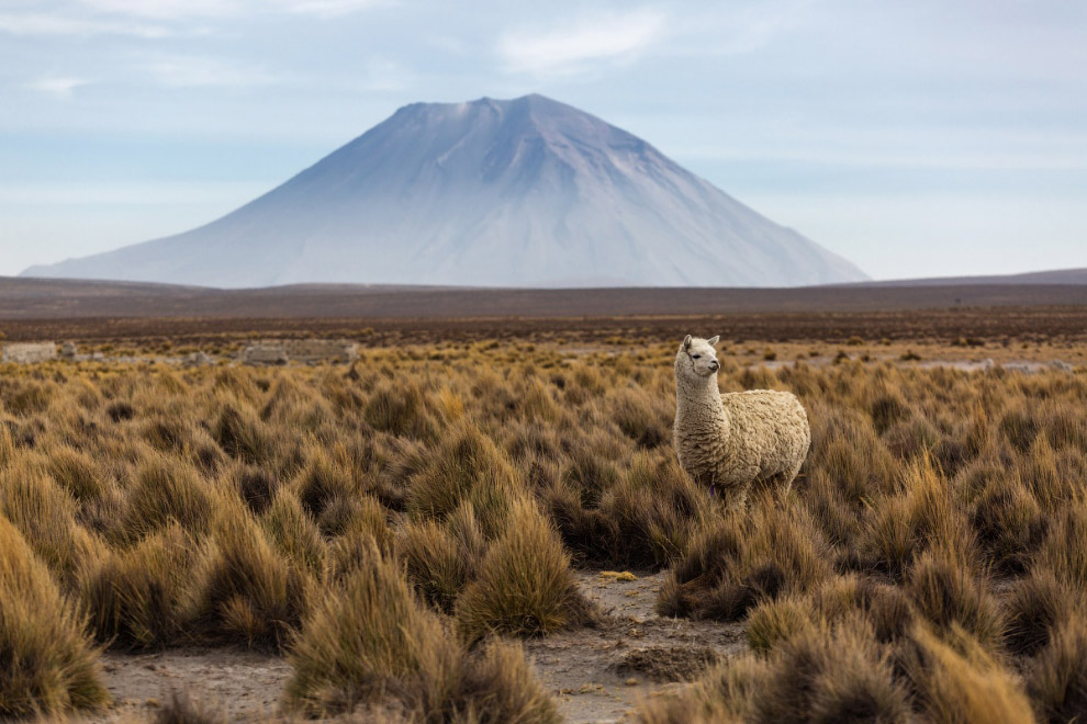 10. На райский оазис Уакачина, над пустынным плато Наско на южном побережье Перу поднимались на