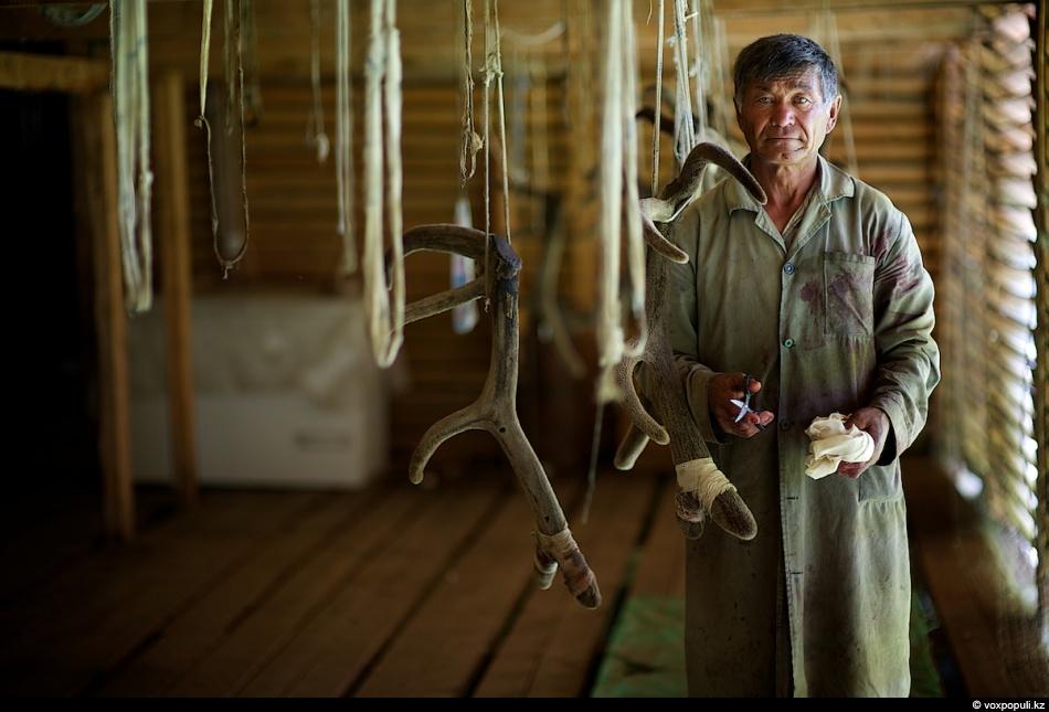 33. Адалберген считается главным специалистом маралового хозяйства. Он опытный пантовар с 15-летним