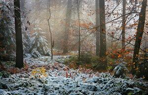 шел первый снег, но осень не сдавалась