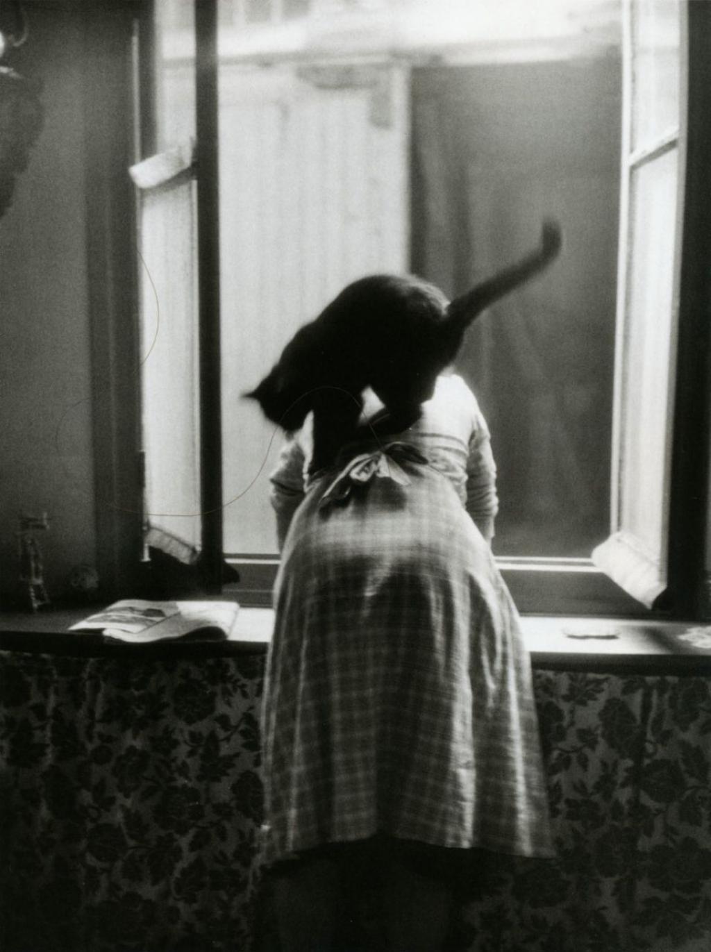 1954. Кошка. Париж