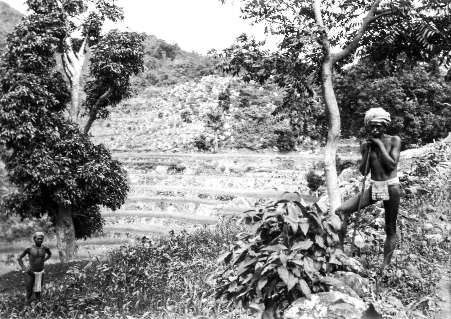 691. Орисса. Пейзаж с рисовыми полями на террасах