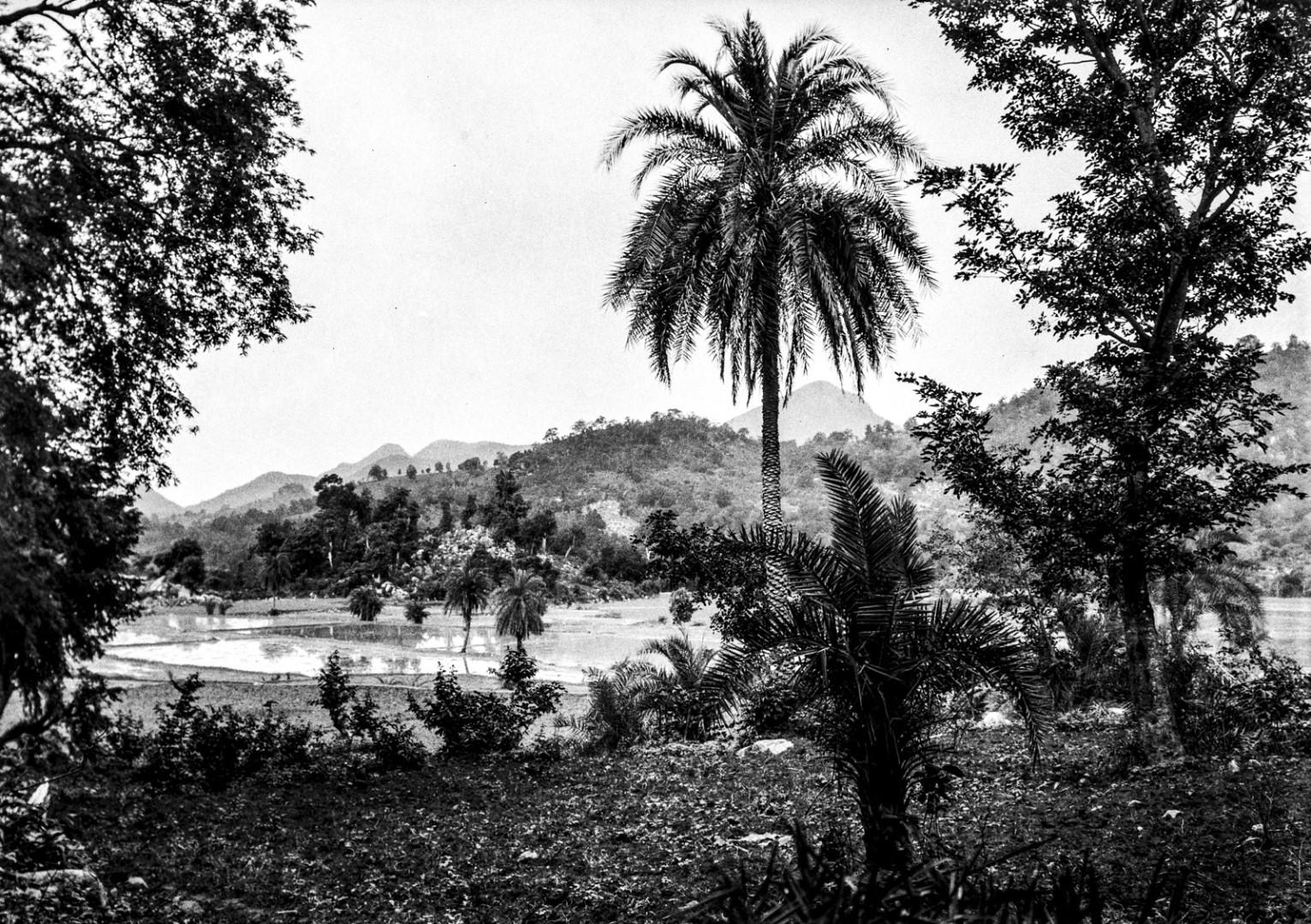 708. Орисса. Субтропический пейзаж с пальмами и рисовыми полями