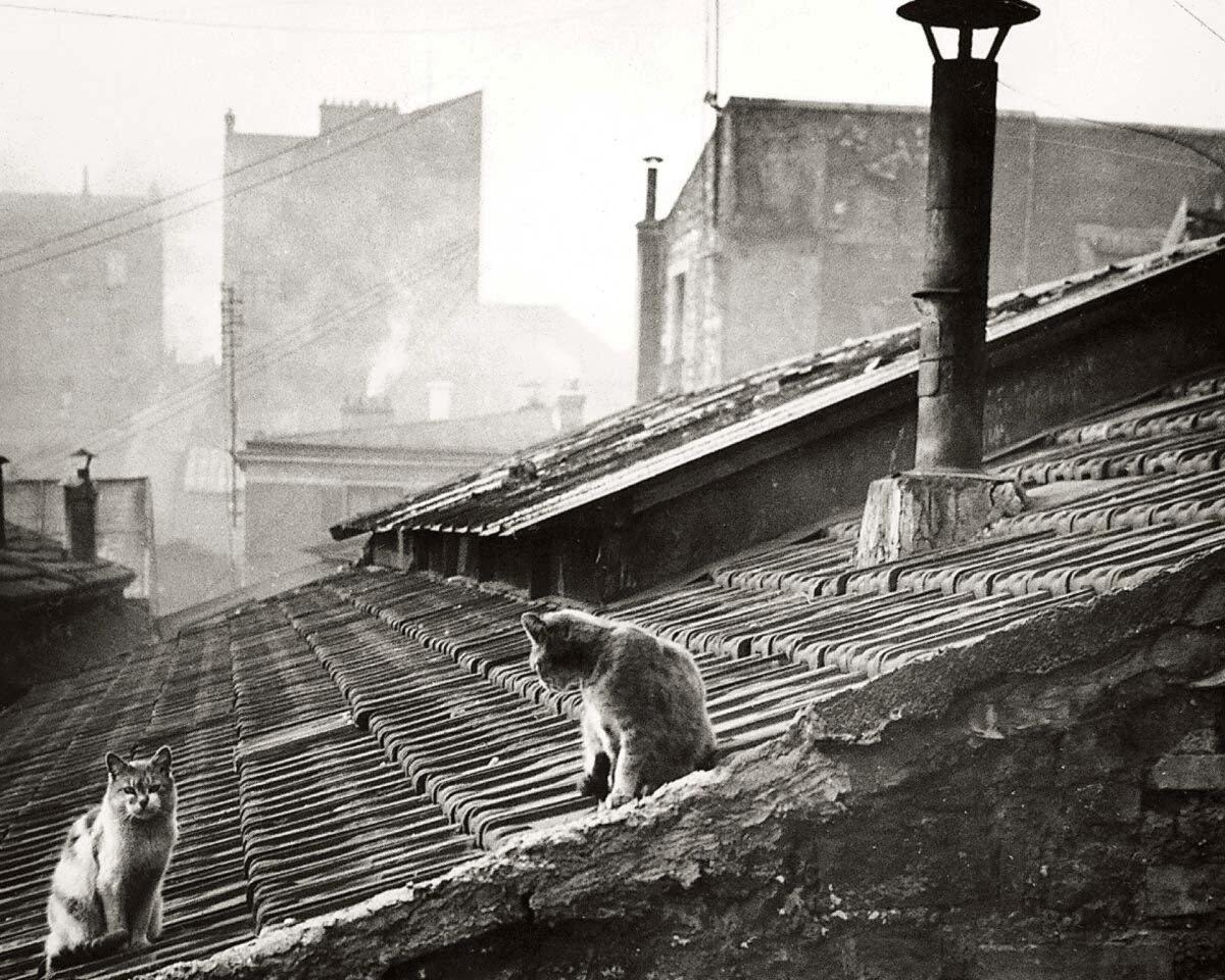 1947. Кошки на крыше
