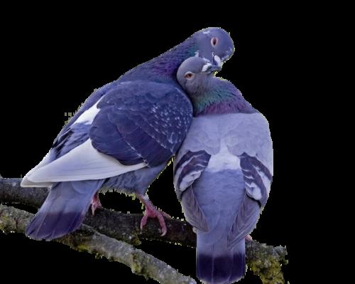 Ptice..... 0_7155b_e3069976_L