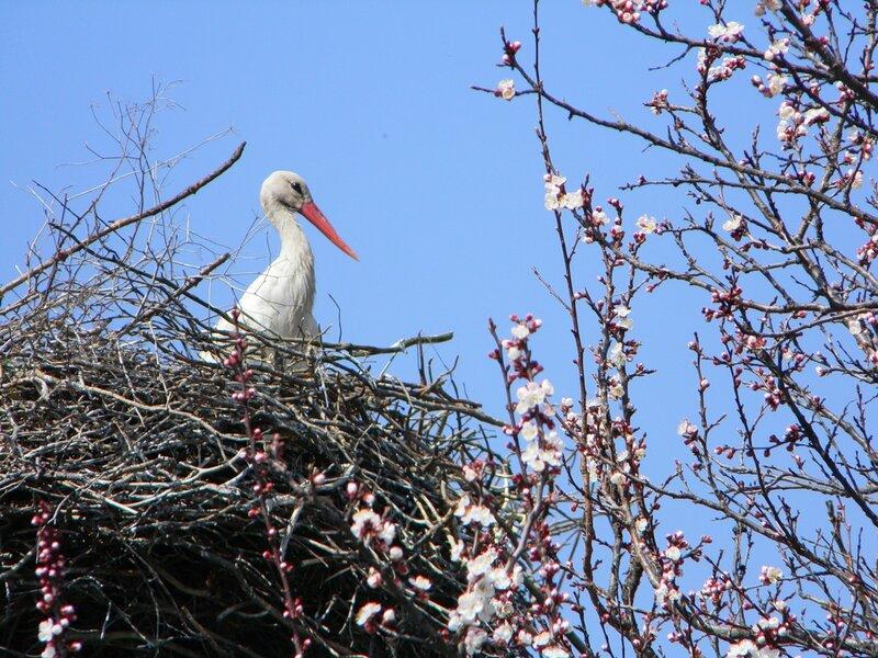 Весна прийшла - лелека