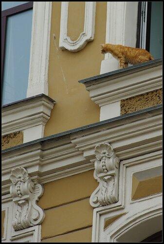 Питерский кот