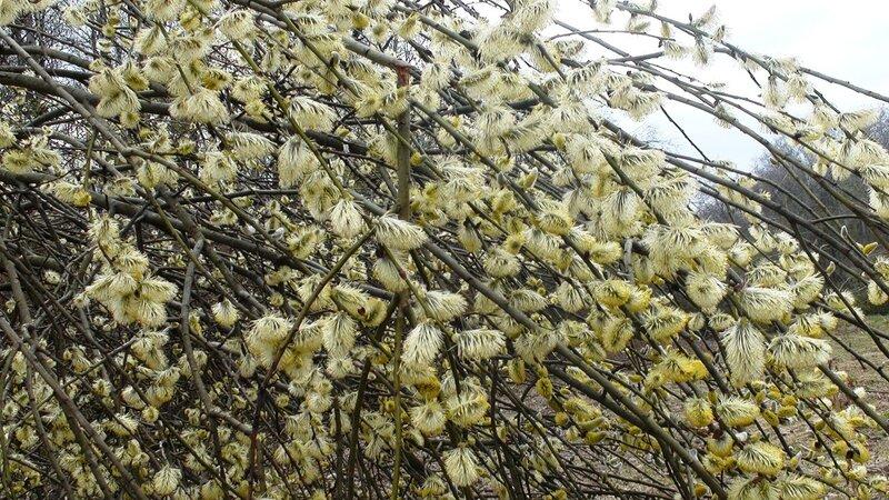 Весна лезет изо всех почек. Первомайская встреча жителей Новорижского