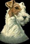 Собаки  0_57c79_69f87342_S