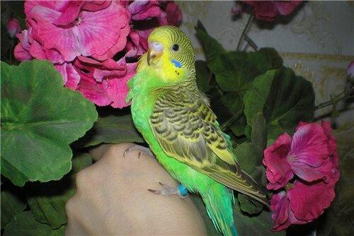 аллергия на попугаев у взрослых