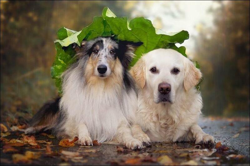собаки-5.jpg