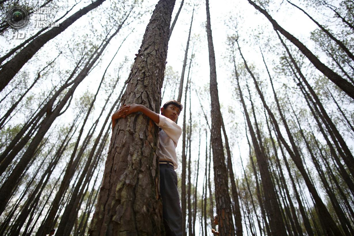 Рекордные объятия с деревьями