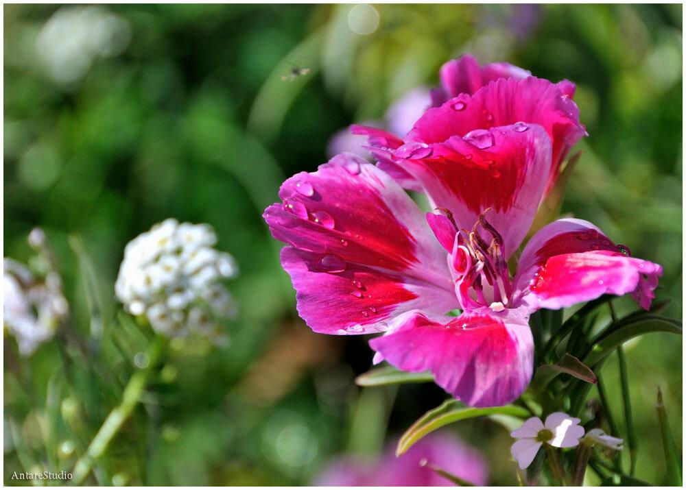 Мед луговые цветы