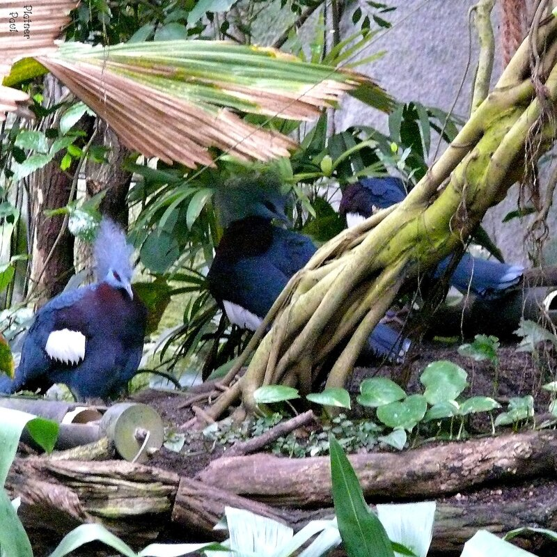 Тропический лес кельнского зоопарка