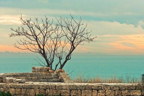 Дерево. Библ, Ливан