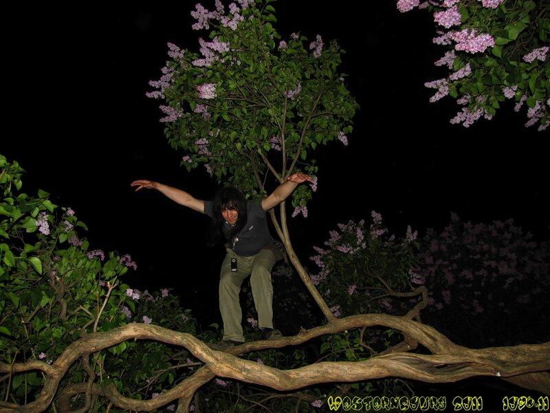 1096.11 Сиреневый цвет 2: Полёт над гнездом кукушки