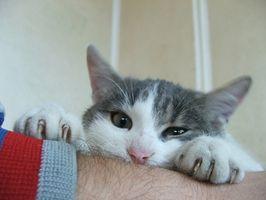 Агрессия у кошек фото