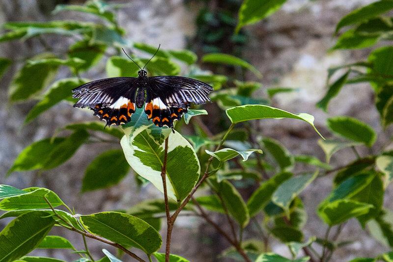 Бабочка. Никитский ботанический сад