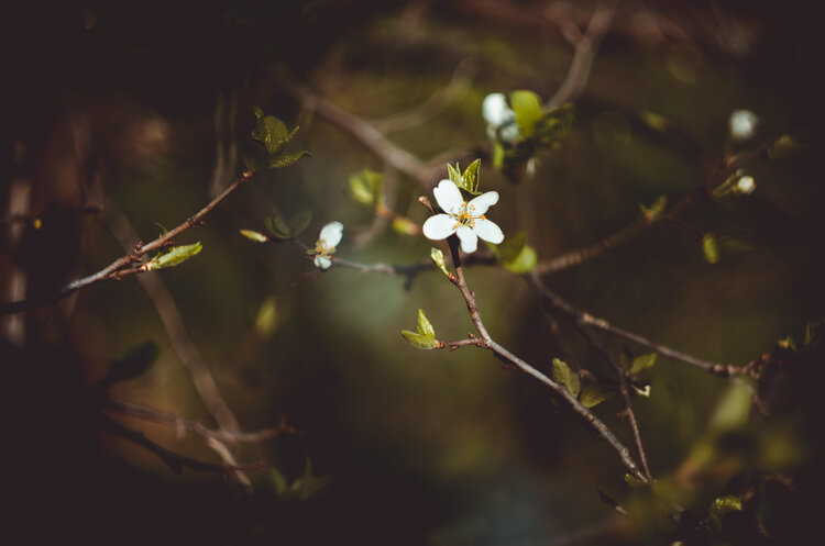 Цветок макро Гелиос-44-2