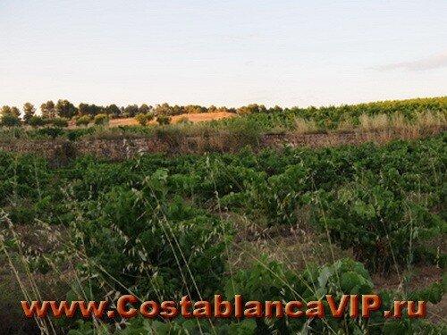 виноградник в Moixent, виноградник в Мохенте, виноградники Испании, виноградники Валенсии, винодельня, винный погреб, винодельческая усадьба, Коста Бланка, бизнес недвижимость, бизнес в Испании, недвижимость в Испании, виноград, вино Испании, земля для виноградника, venicola, viña, bodega