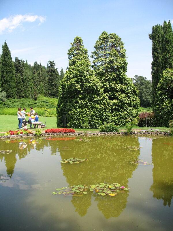 Водяные сады с нимфеями в Парке Сигурта.Отражения.