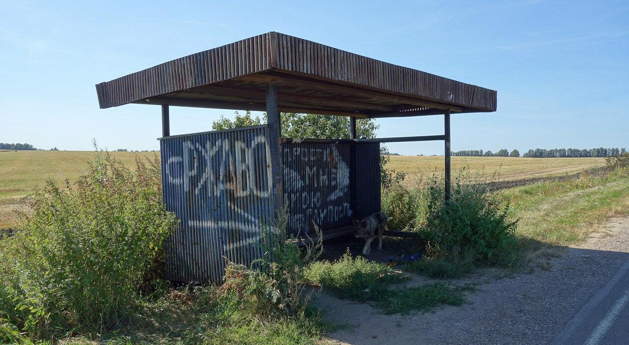 остановка и пес у села Ржаво